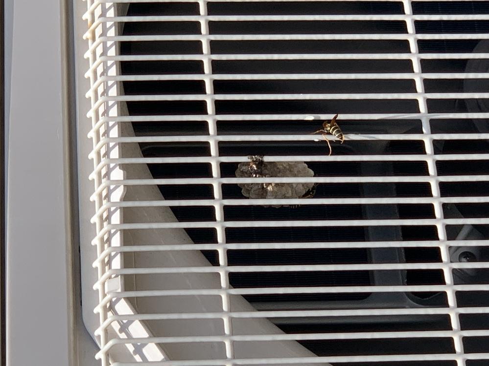この蜂の名前を教えてください!