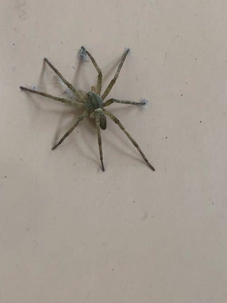 この蜘蛛の名前が知りたいです┏〇゛