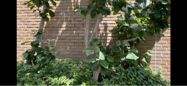 この木は何ですか?