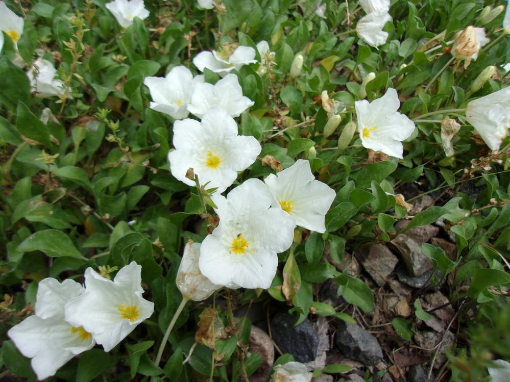 写真の花の名前を教えて下さい。