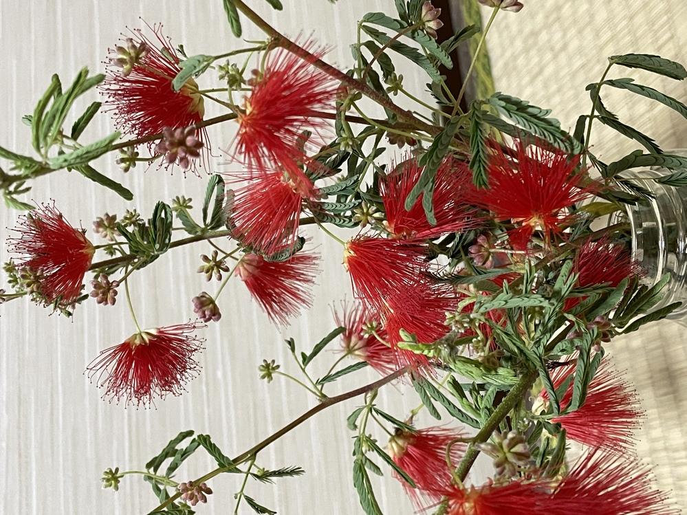 この木(花!?)の名前を教えて下さい。