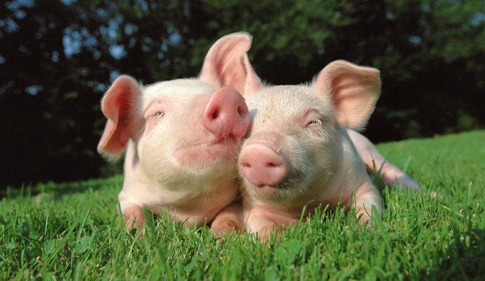 豚肉、どう食べるのが好きですか?