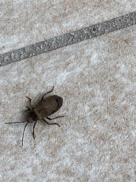 最近よく見るのですが。 この虫は、なんていう虫でしょうか??