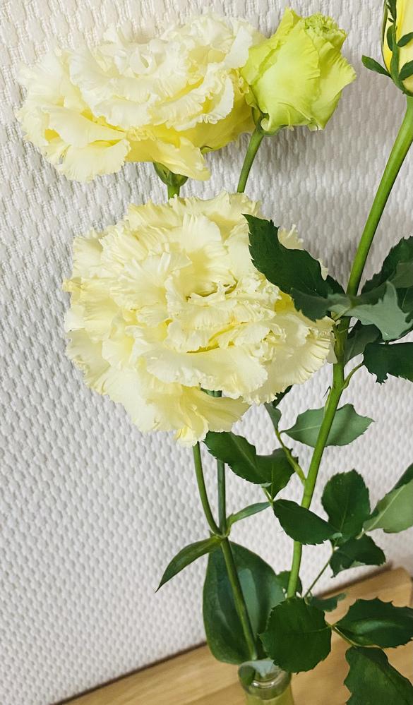 花の名前 花を購入したのですが 名前をど忘れしてしまいました… どなたか分かる方はいらっしゃいますでしょうか(;ω;)