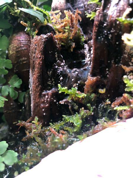 水槽のこれは何ですか? カビでしょうか、、? なにか対策した方がいいですか? エビとメダカも飼っています。