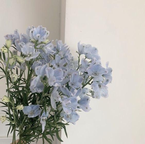 この花の名前が知りたいです