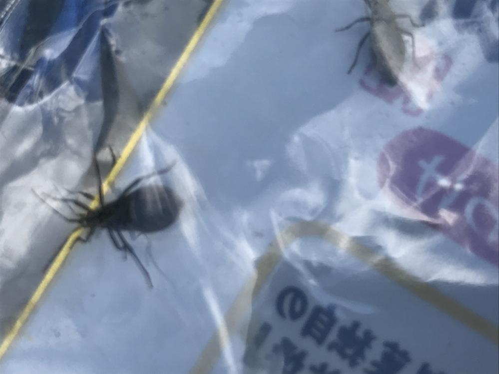 この虫、何ですか? スイカの茎に大量にいました。 お酢系の殺虫剤には、びくともしません。 どうやって退治したらいいですか? 農薬は使いたくありません。