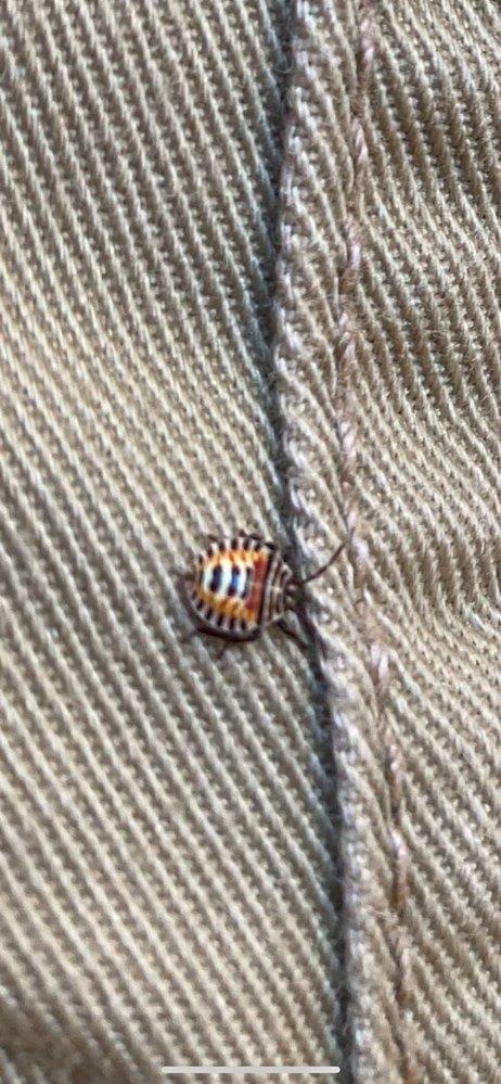 これは何という虫でしょうか。