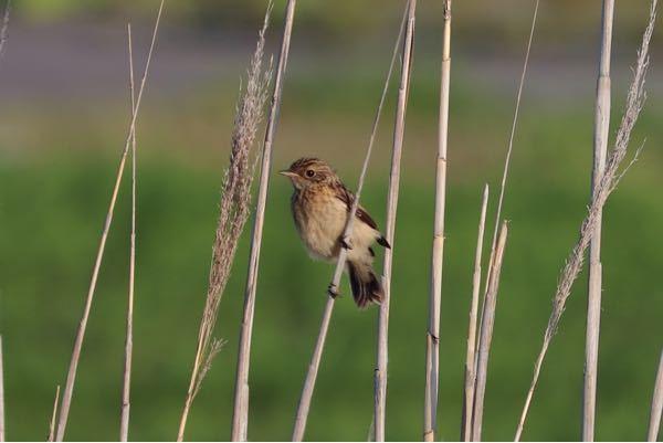 これは何鳥ですか?