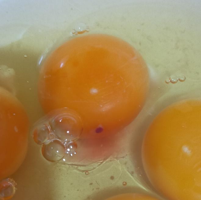 卵を割ったら、こんな感じでした。 もしかして、受精していた卵でしょうか?(*_*)