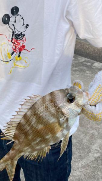 この魚はなんですか?