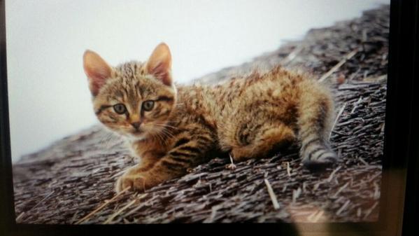 この猫を保護しようと思っていますが、保護しても良いですか?