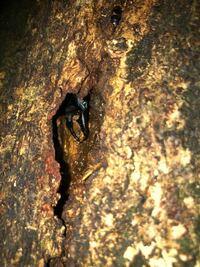 ゴキブリ?クワガタ?鳥肌もんですけど、少し可愛い。オオゴキブリ?コクワガタ?それとも別の種類でしょうか?