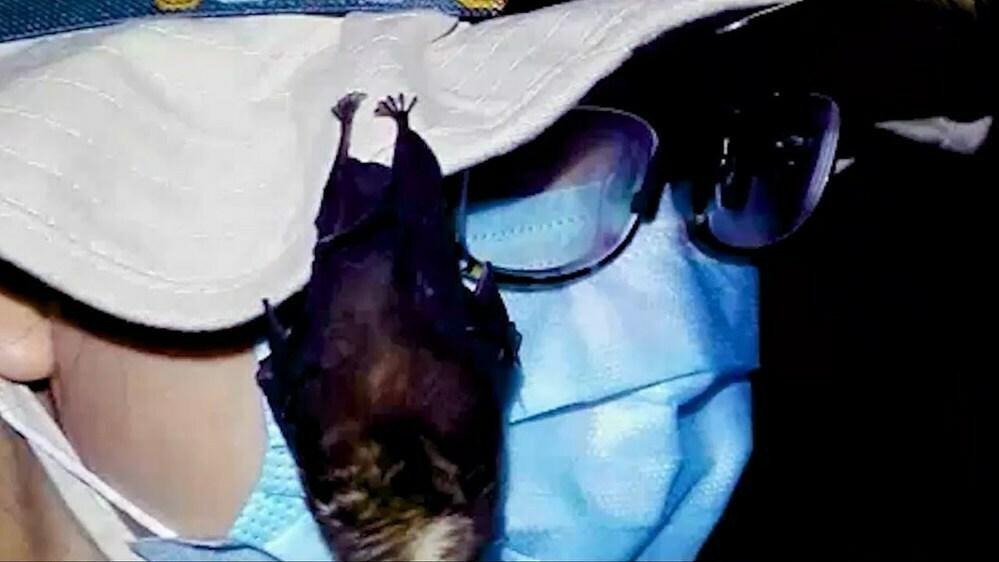 中国、「武漢研究者にノーベル賞」漏えい説に反発 (yahoo.ニュース) コウモリに噛まれた映像はこっそり削除し、武漢研究所でコウモリを飼っていた動画が出て来て大嘘がバレたから、苦し紛れに、このグズりか? https://news.yahoo.co.jp/articles/b57824f176dd475485c3e46d62098bf63658105e データの開示の拒否でモロバレなのに、何んとでも嘘を言う。 共産党一党独裁を堅持する為なら、手段を選ばないという事かな?