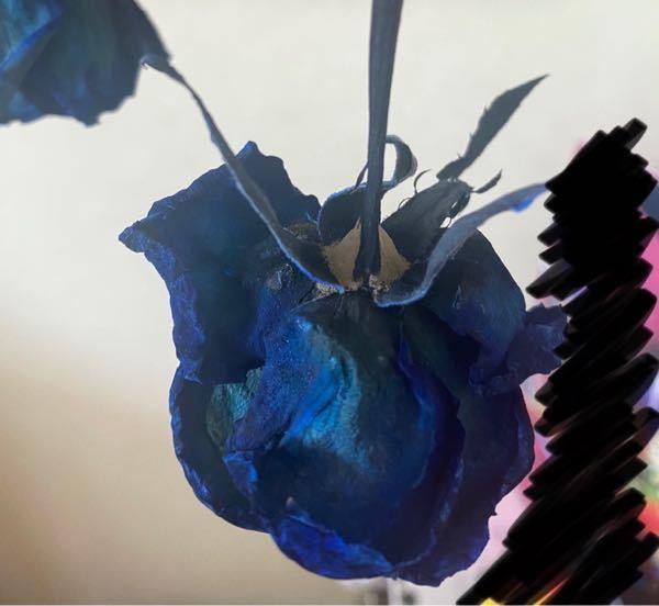 バラをドライフラワーにしようと思い吊るし始めて5日が経ったのですが、この花の根元に溜まってるのはカビでしょうか?