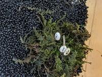 カナヘビを飼っていて、メスが卵を3個産んだのですが、うち1つがカビっぽくなってきて無精卵だったようで、ライトを当てると黄色いです。 無精卵が有精卵とくっついていて簡単には離せない感じなのですが、有精卵が孵化するまでこのままで良いのでしょうか?  左下が無精卵です。