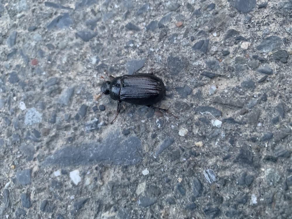 自宅近くで見つけました。 この虫、わかる方いますか?