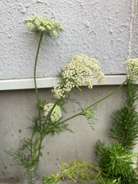 植物に詳しい方にお願い致します。 裏庭に咲いてました。白いお花です。 何と言うお花でしょうか? 教えて下さいませ。宜しくお願い致します。