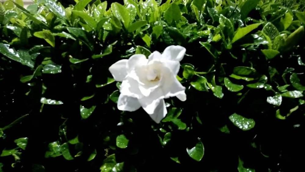 この植物の名前を教えて欲しいです。 お手数ですがお願い致します。