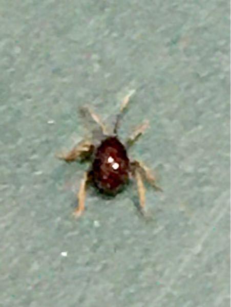 写真の虫は何と言う虫ですか?