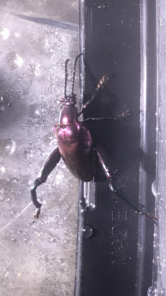 この虫なんですが名前分かる方いませんか?