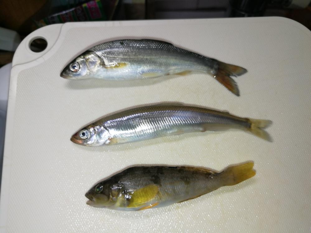 この魚食べられますか? 全部10cm弱の大きさです。 子供が埠頭で釣ってきました。