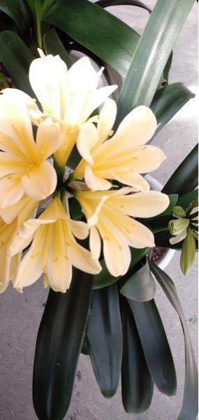 この花の名前と由来誰かわかる方居ますか?