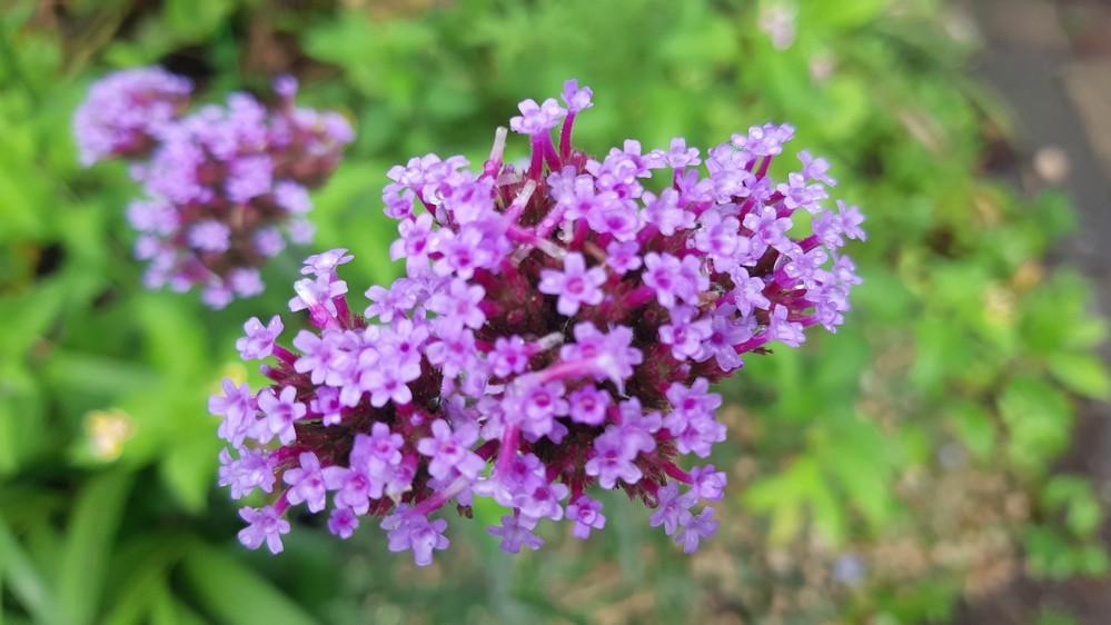 いつもお世話になっております。 こちらの花の名前を教えてください。 宜しくお願いいたします。