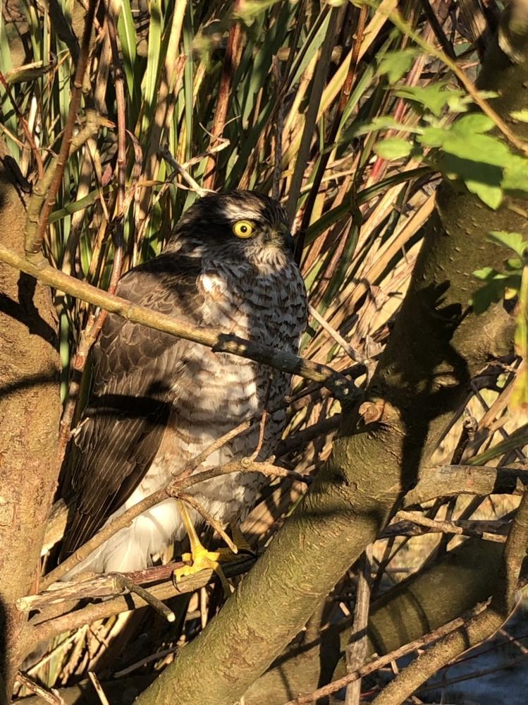 この写真の鳥は何という鳥ですか? 近所で見かけて、近づいても 動かなかったので気になりました。