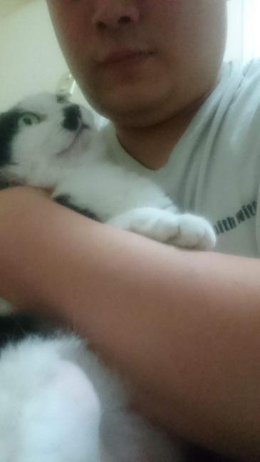 私の猫はワガママですか? 甘やかし過ぎました