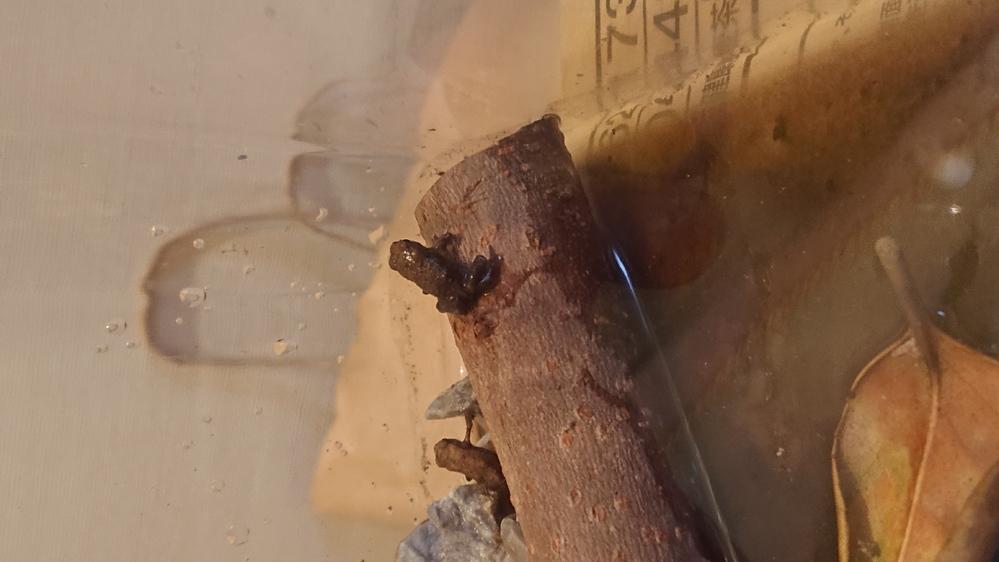 このカエルの名前、わかる方いますか? 6月の晴れた日に、木陰にいました。