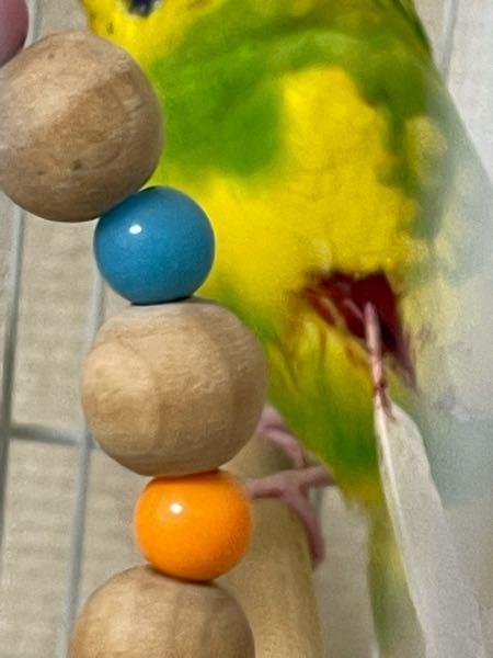 飼っているインコ(2歳)の羽から血が出てしまいました。 放置でいいのか、折れた羽は取るべきなのか 応急処置としてやるべきことがありますか? 教えてください。 それともう1匹のインコ(3ヶ月)は今日2時間ほど出か けていたらなくなりました。 そのせいで折れてしまったのか あと、仲良しのセキセイインコの1羽が病気になり、 やむなく隔離していたのですが、 残念ながら、今日、亡くなってしまいました。 残されたインコは自咬症になってしまっています。 経験者の方、どうしたら良いか、どうしたら残されたインコを救うことができるのか、教えて下さい。 文章下手ですみません。