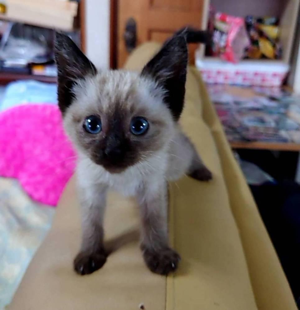 この猫の種類を教えてください。