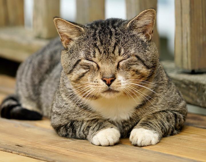 猫好きな人は猫がモフモフの友ですか?