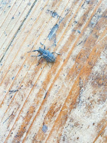 この虫ってなんて言う虫ですか??