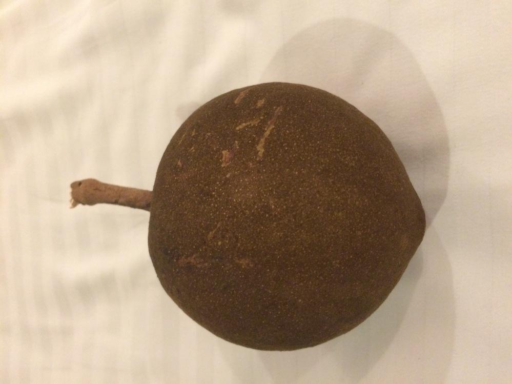 この木の実?が何か分かる方いらっしゃいますか? 数年前にカンボジアに行った時に大きな木の下で拾いました。大きさは野球のボールくらい、ベロア素材のような不思議な手触りで、ずっしりと重く非常に硬かったです。 持ち帰ることも出来ず、今でも時々あれは何の実だったのだろう?と思うこともあり質問させていただきました!