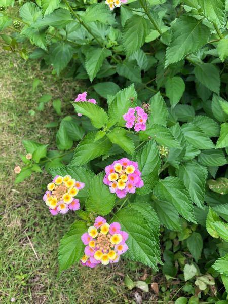 これは何という花でしょうか?
