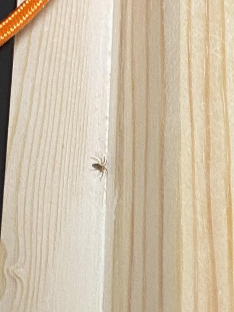ベッド周りに出てくる虫について質問です。 数ミリほどで目視で確認できる八本足の虫をよく見かけます。幼体かと思っていたのですが、数週間見かけても全てこのサイズなので、ダニの仲間なのかと思い始めたの...