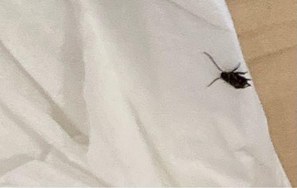 画質が荒いですが、これはやはりゴキブリでしょうか?