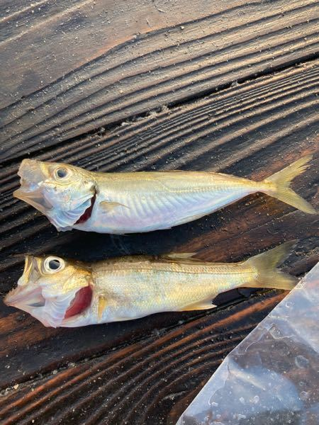 釣り サビキ釣り 魚の種類 サビキ釣りで釣れた魚です。 上の魚はアジですが、下の魚はなんでしょうか?? 10cmくらいです