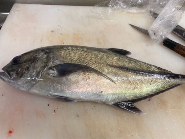この魚の名前がわかる人いますか?