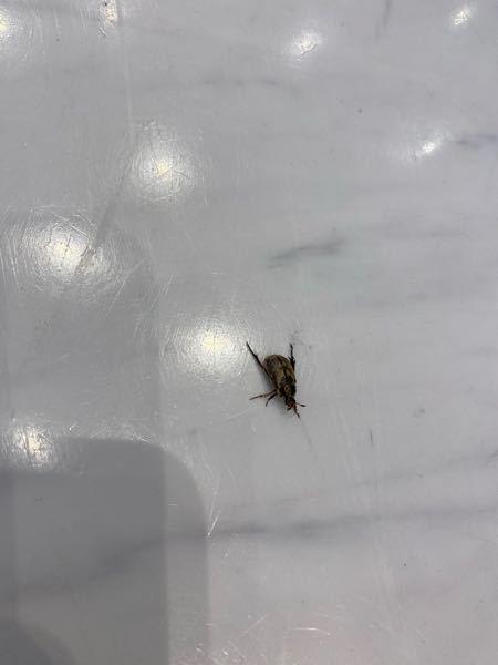 これはなんの虫ですか?たくさん出るのですが時期の問題ですか?