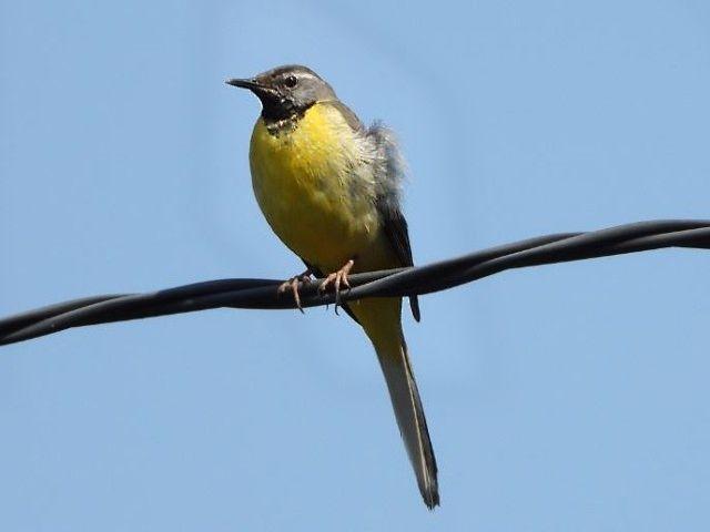 この鳥の名前を教えてください。 本日九州の高原で撮影。