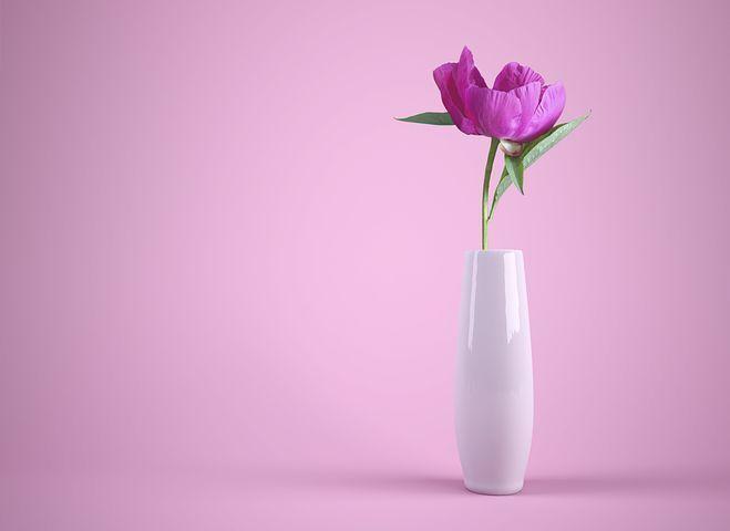 この花の名前わかる人いますか?