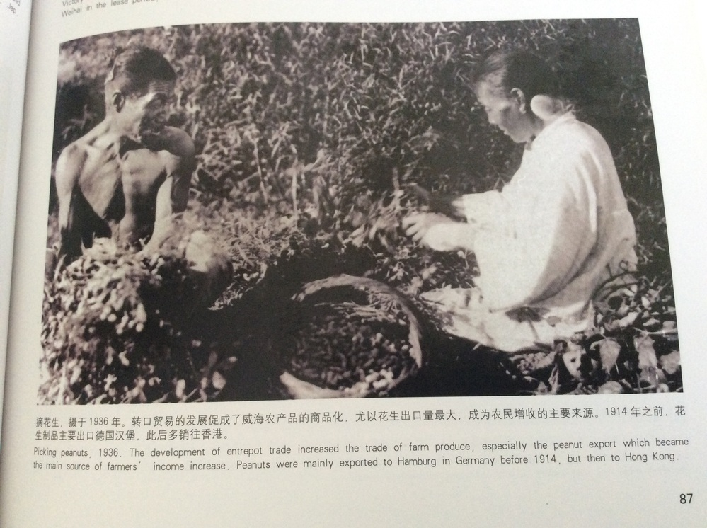 Picking peanuts , 1936. The development of entrepot trade increased the trade of farm produce , especially the peanut export which became the main source of farmers' income increases. Peanuts were mainly exported to Hamburg in Germany before 1914, but then to Hong Kong. この文章を日本語で翻訳して欲しいです、宜しくお願いします。