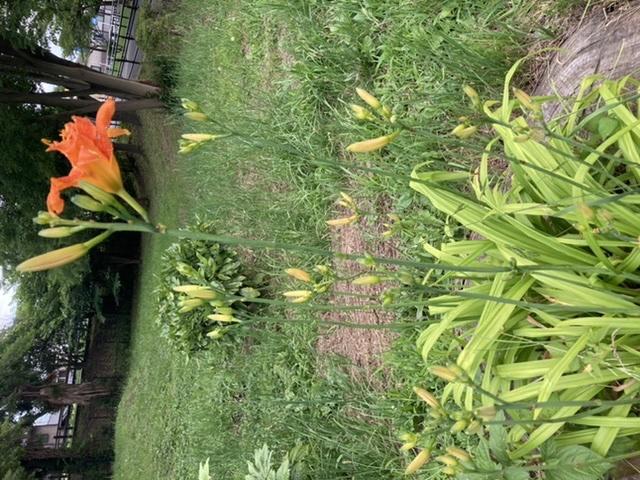 この花、何かわかりますか?