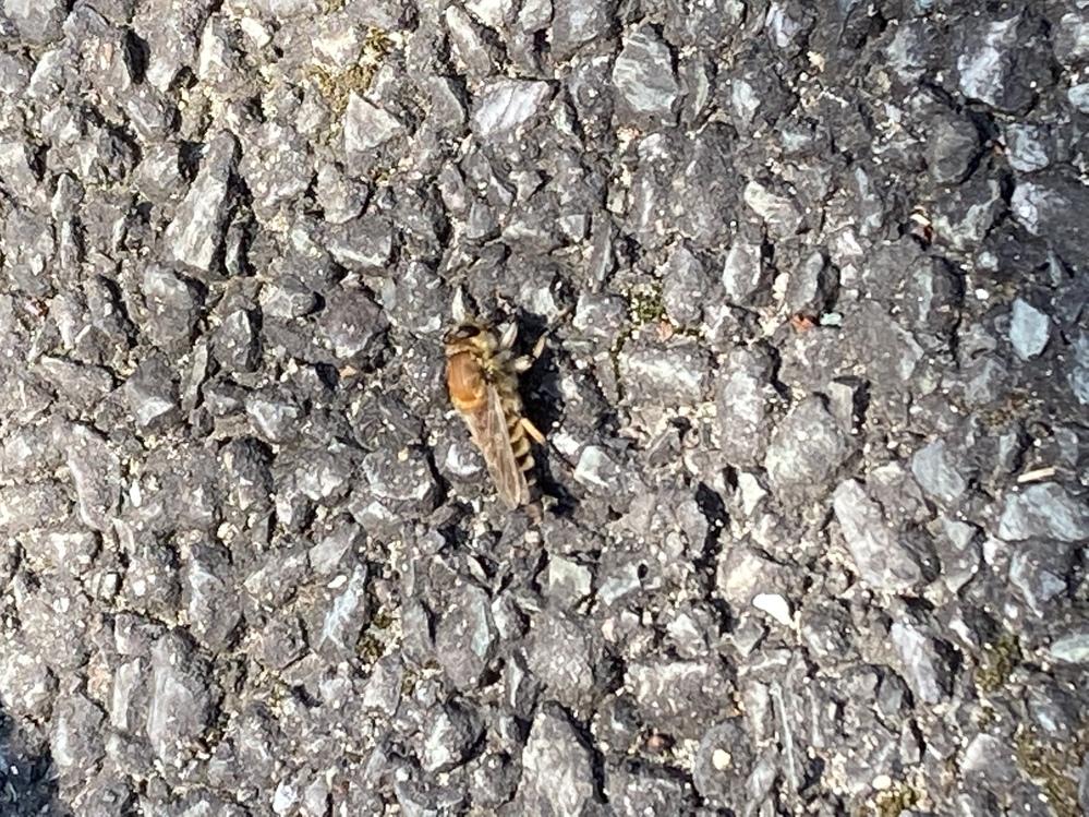 この虫の名前はなんでしょうか?