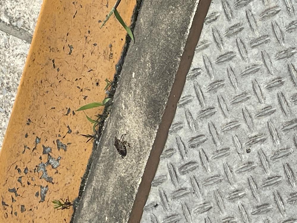 この虫なんて名前ですか?