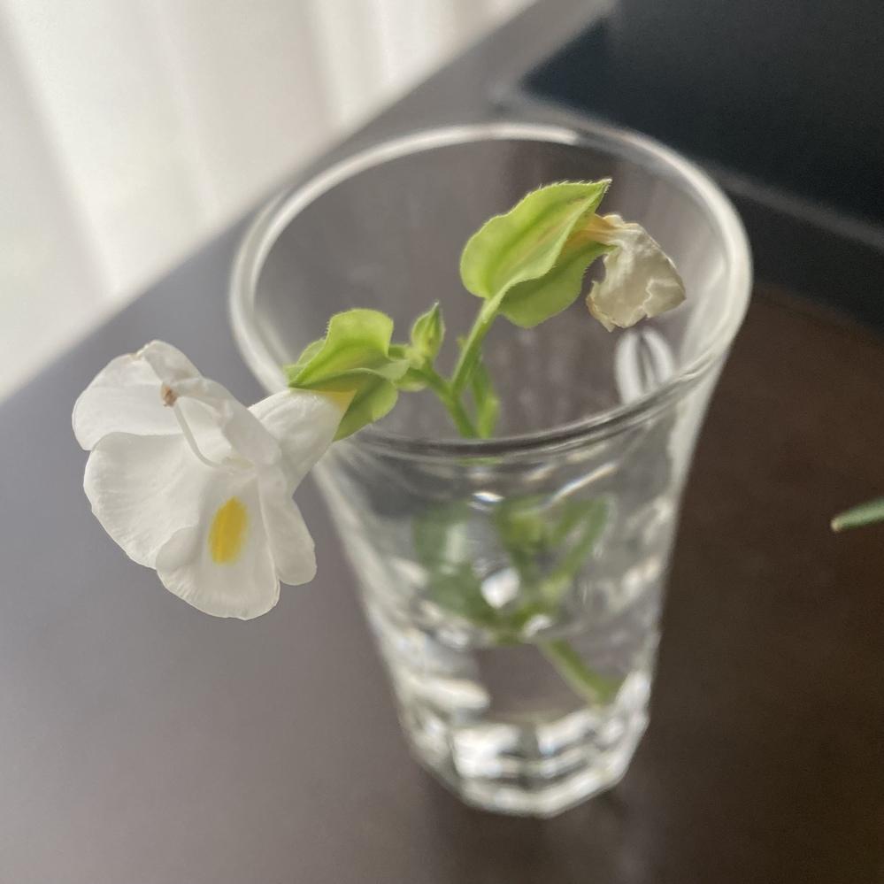この花の名前を教えて欲しいです!