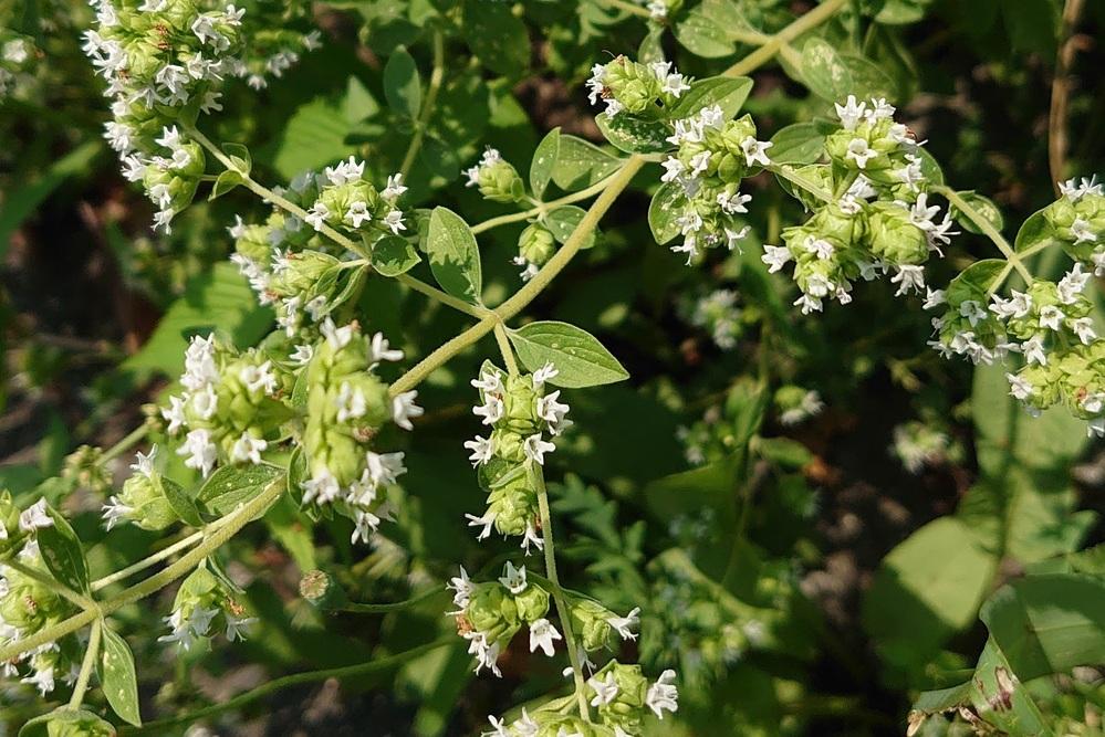 散歩中に見かけた花です。この花の名前を教えてください。よろしくお願いします。